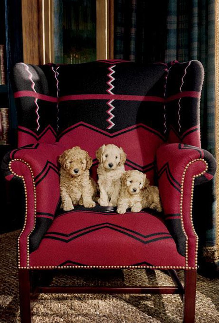 Good Puppies Cozy Up In A Ralph Lauren Home Wingback Chair In Vintage Red  Algonquin Fabric