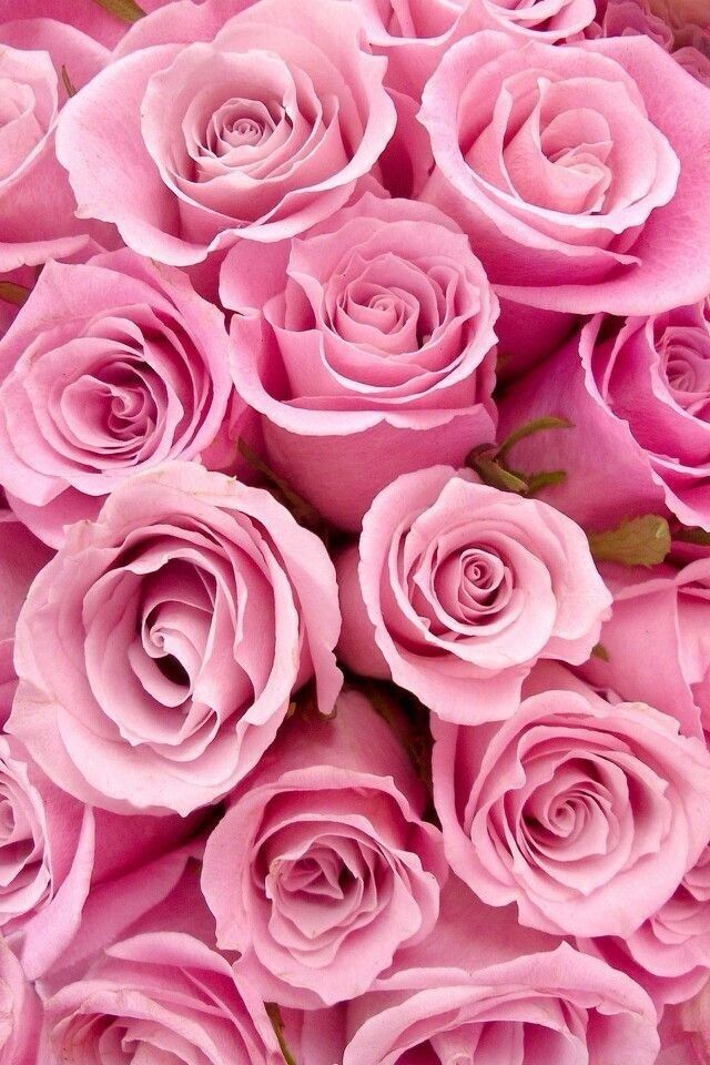 ROSES:  Classic pink bouquet of roses -  perfectly formed, breathtaking, still budding.  Just looking at them lights up my day!