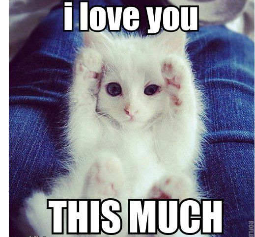 I Love You Memes For Him And Her Funny Cat Memes Cute Baby Animals Cute Funny Animals