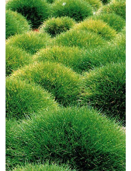b renfellgras 3 pfl in 2018 gardening landscaping pinterest garten bepflanzung und. Black Bedroom Furniture Sets. Home Design Ideas
