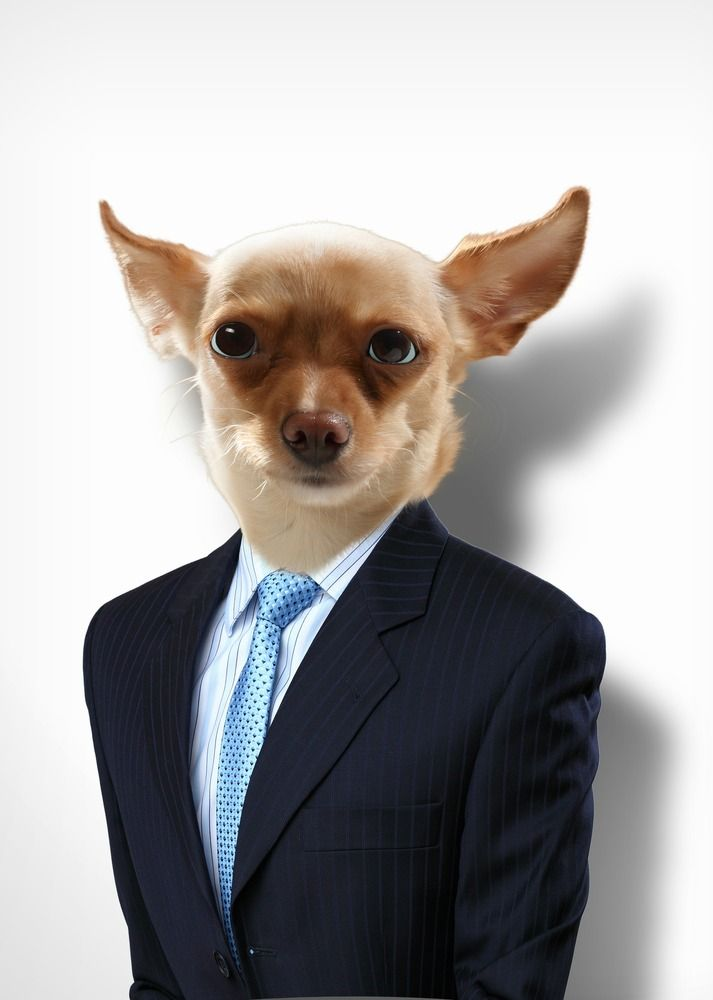 Fancy Pups Dogs Dressed To Impress Pet360 Com Pets Online Pet Store Dog Dresses
