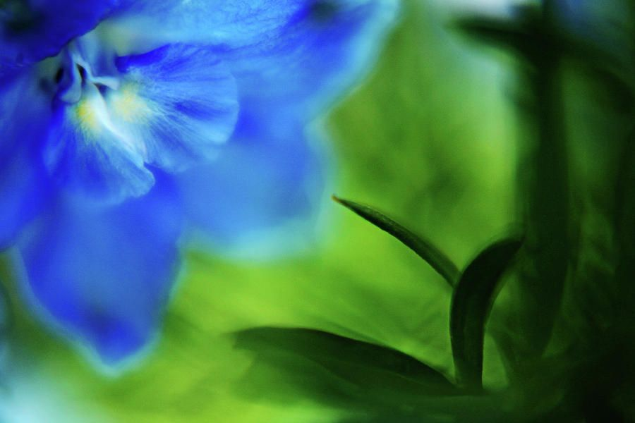For me one of my favorite colours in flowers: blue