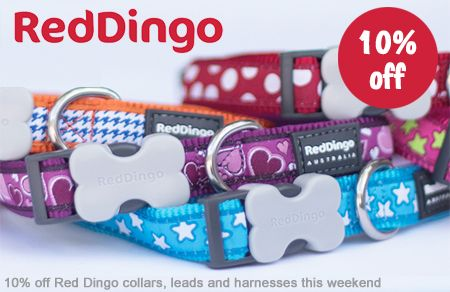 Sale weekend get 10 off Red Dingo collars, leads and