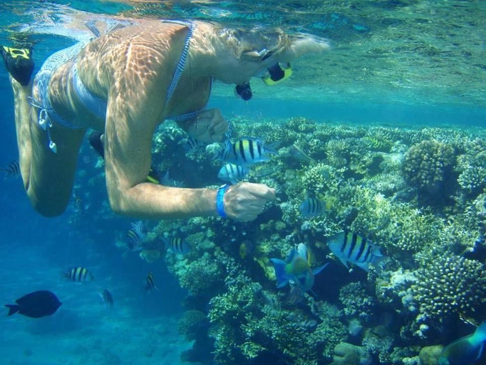 El mar rojo, Excursiones en tierra http://www.espanol.maydoumtravel.com/Excursiones-desde-el-puerto-de-Safaga/5/1/132