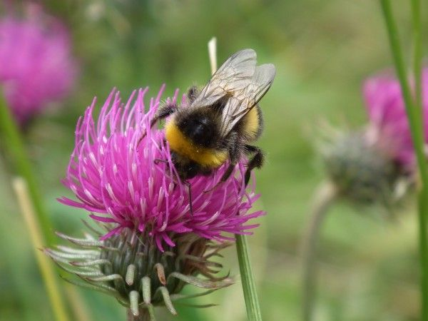 bee-wild-140403