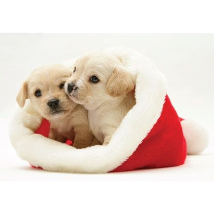 Cute Christmas Puppies.Picture Of Christmas Puppies Christmas Card Puppies