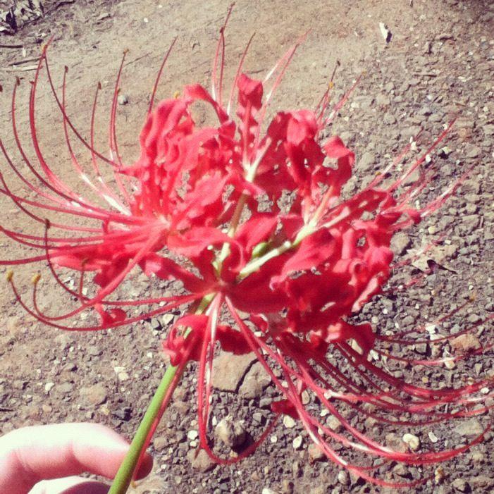 45 Affordable Diy Design Ideas For A Vegetable Garden: Beautiful Flowers, Outdoor Gardens