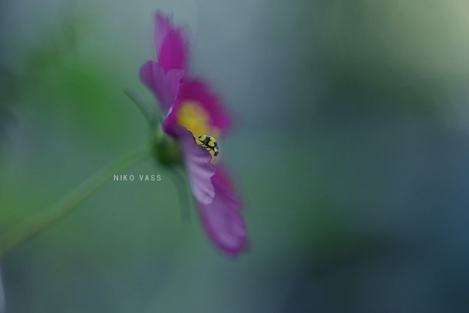 Lady Bird's World by Niko Vass on 500px
