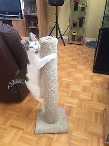 arbre a chat a vendre montreal