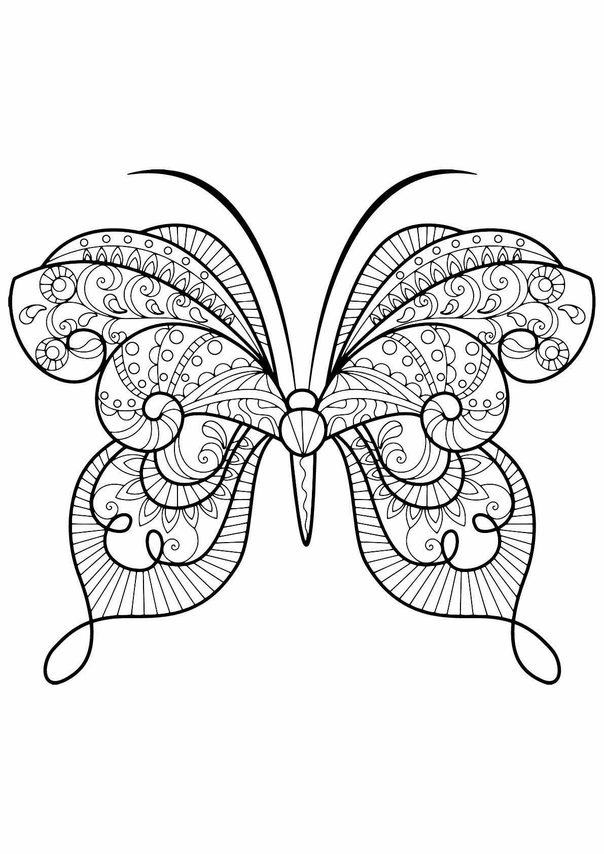 Butterfly Coloring Book For Adults Beautiful Butterfly Beautiful Patterns 15 Butterfl In 2020 Butterfly Coloring Page Insect Coloring Pages Butterfly Pictures To Color [ 1684 x 1191 Pixel ]