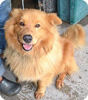Pembroke Ga Golden Retriever Mix Meet Leo A Dog For Adoption
