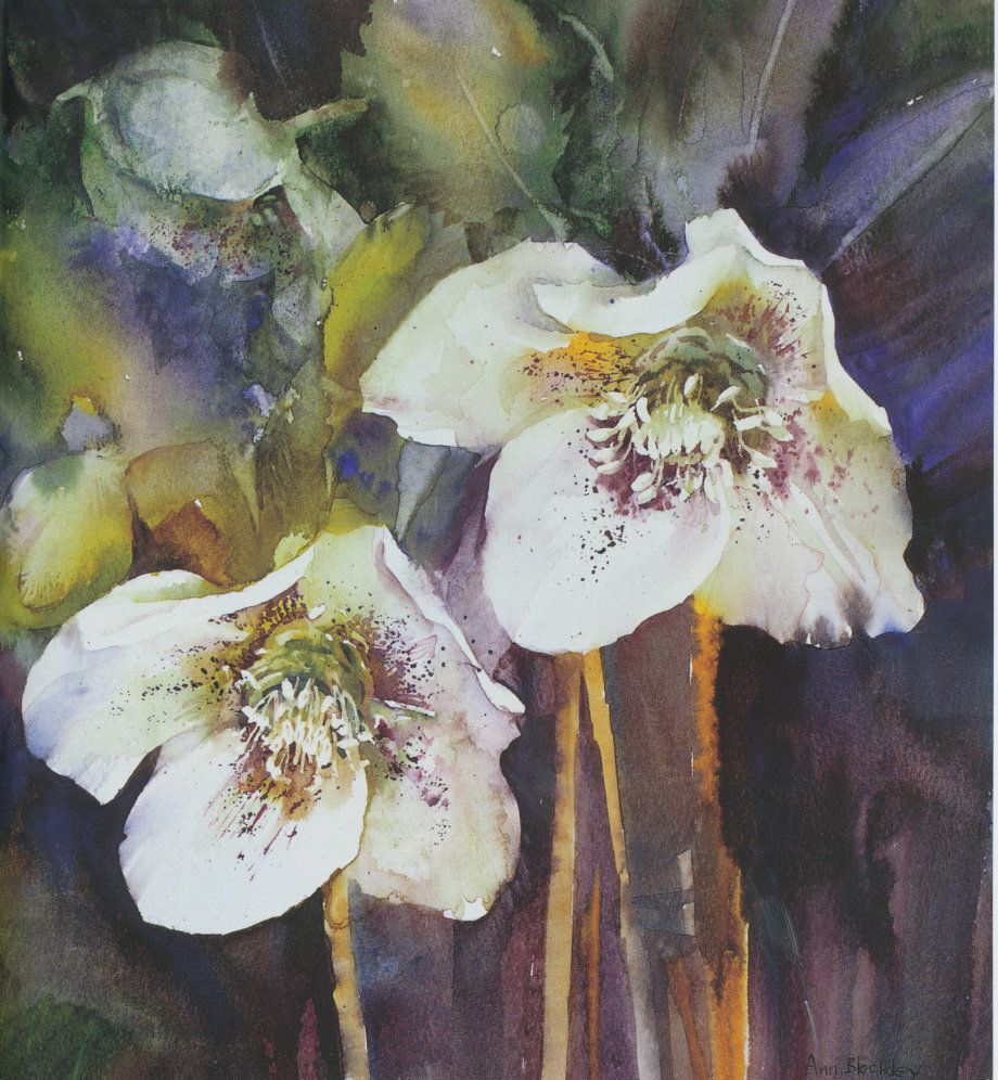 ann blockley | hellebores from watercolour textures book published 2007 making ...