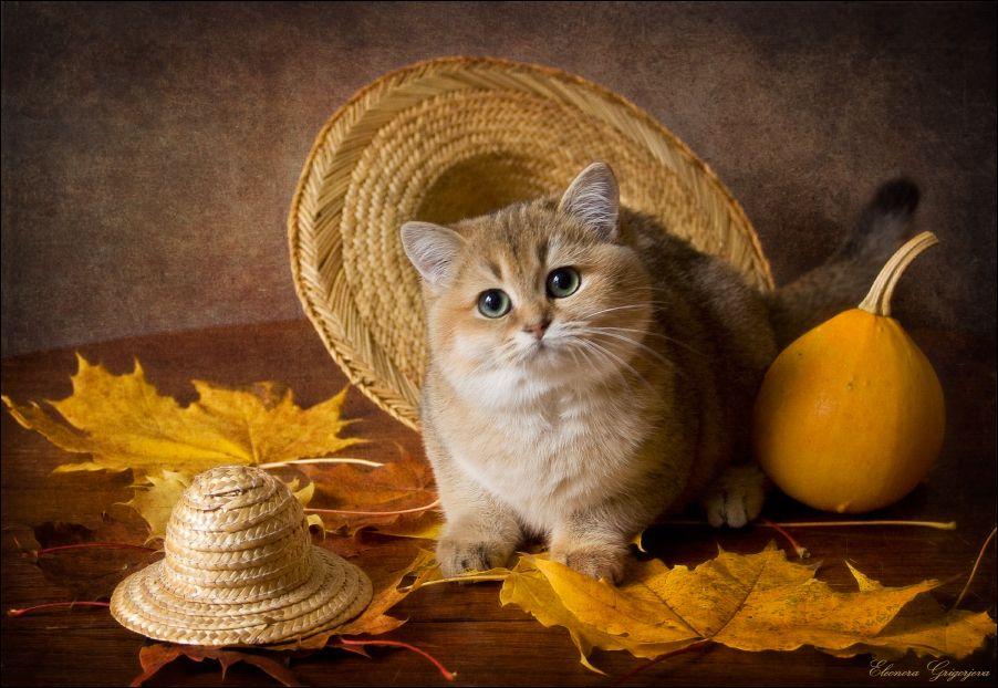 Открытки кота с осени, рисунок книг
