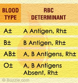 Blood Types Chart  General Knowledge Group Board