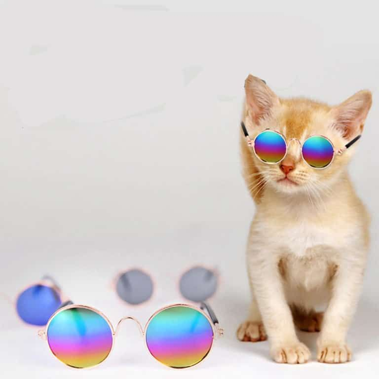 Lightning Bargains Gone In A Flash Pet Sunglasses Cute Dog Collars Cool Cats
