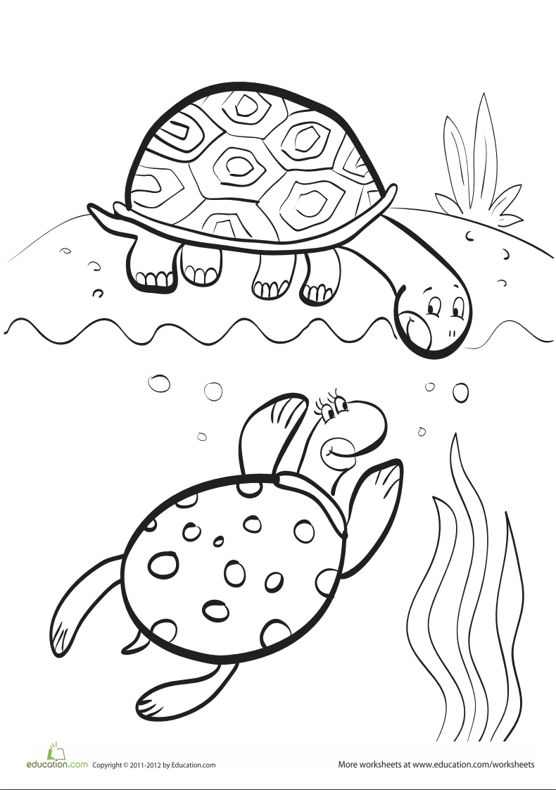 Turtles coloring page   Turtle coloring pages, Cool coloring pages ...