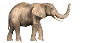 Download Elephant Png Images Background Png Free Png Images Elephant Images Elephant African Bush Elephant Find images of transparent background. download elephant png images background