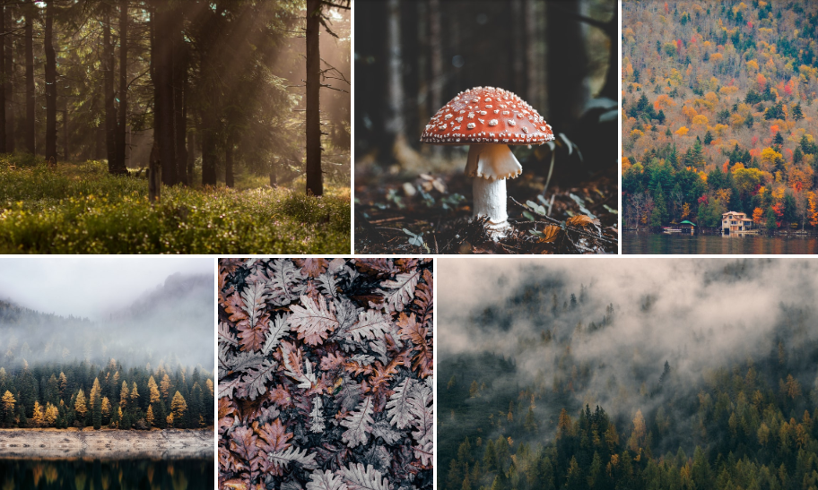 12+ Awesome React Photo Gallery Components OnAirCode