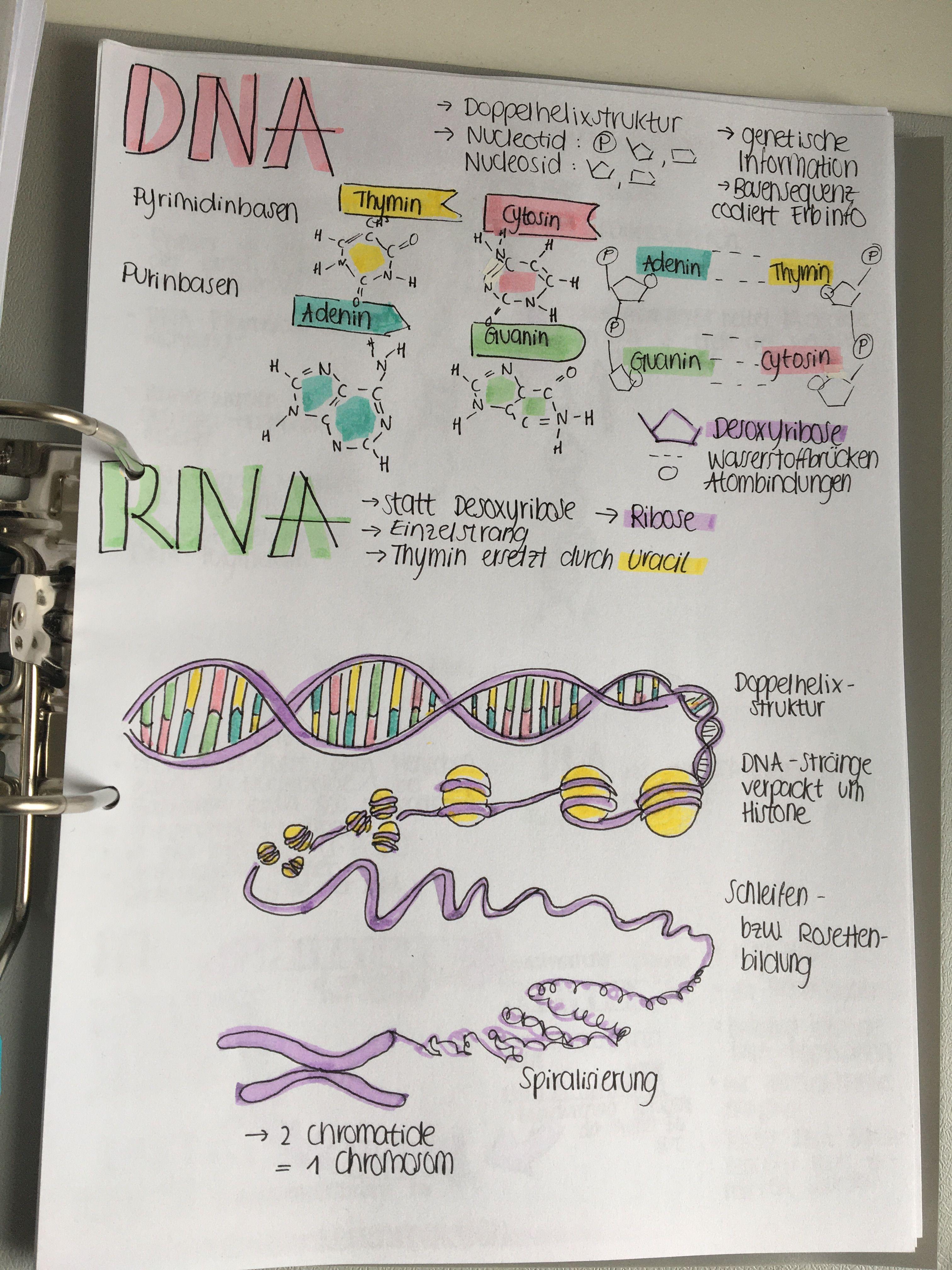Genetik Studium