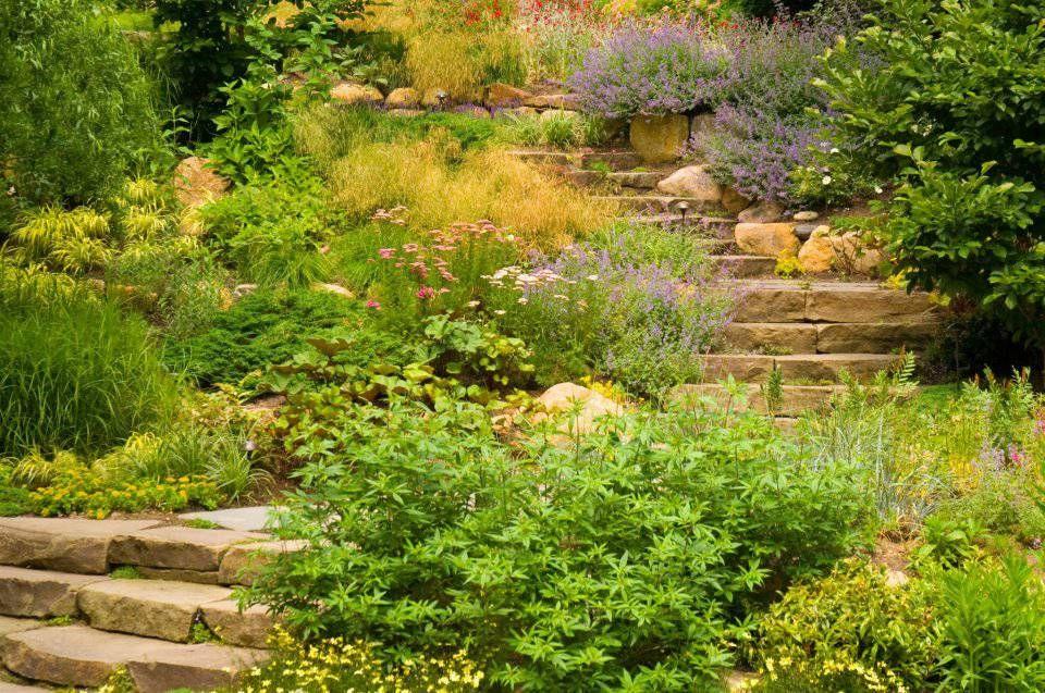 Resultado de imagen de plantas para jardin en taludes Jardin