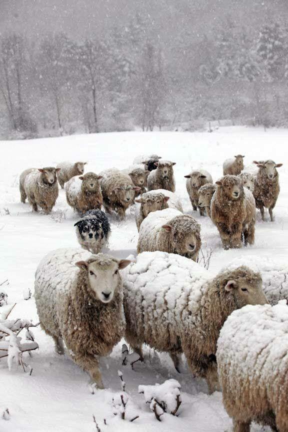 Snowy blankets