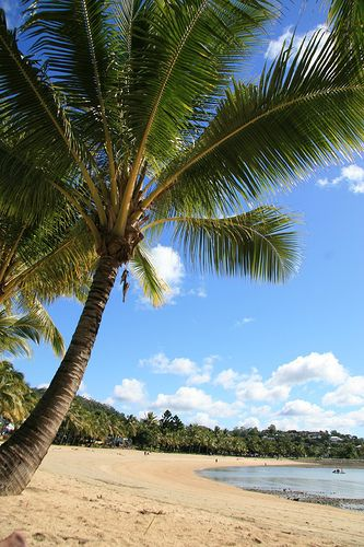 Airlie Beach Palm Tree by Rob Sangster, via Flickr
