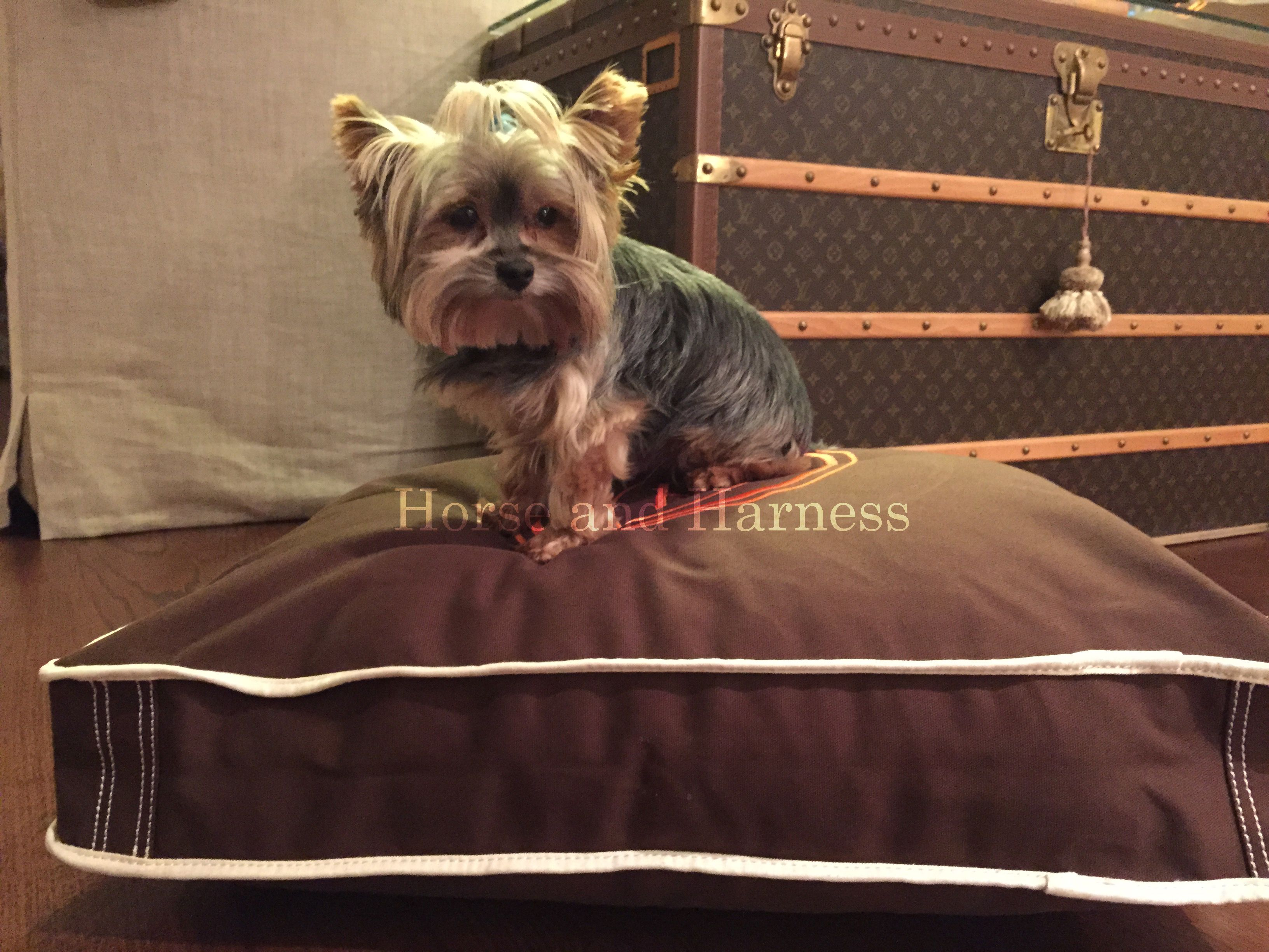 HERMES CUSTOM EMBROIDERED PET BED CUSHIONS GREAT HOME