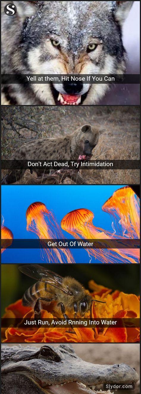 Lifesaving Combat Tips To Survive Wild Animal Attacks | Animal kingdom | Pinterest | Wild ...