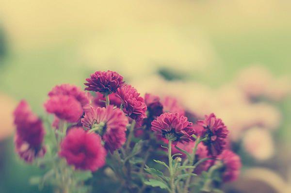 flowers, flower, floral, nature, plant, garden, colors, colorful ...