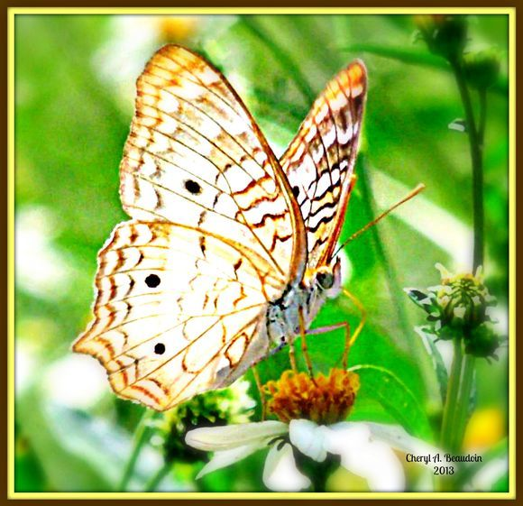 Eye of the butterfly copy copyrightints and price upon eye of the butterfly copy copyrightints and price upon request greeting cards also available m4hsunfo