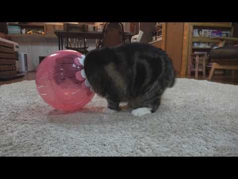 Watch #Maru Sort of Fit, Kinda Sit, and Then Definitely Get #Stuck http://ibeebz.com