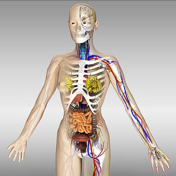 Human Anatomy Complete Collection Female Anatomy 3d Models