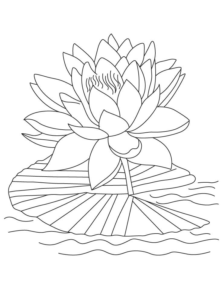 Printable lotus coloring pages