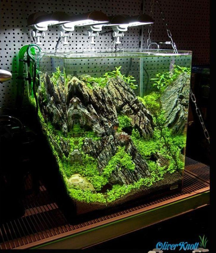Aquascape Planted Tank Aquarium Landscape Aquascape Aquarium Fish