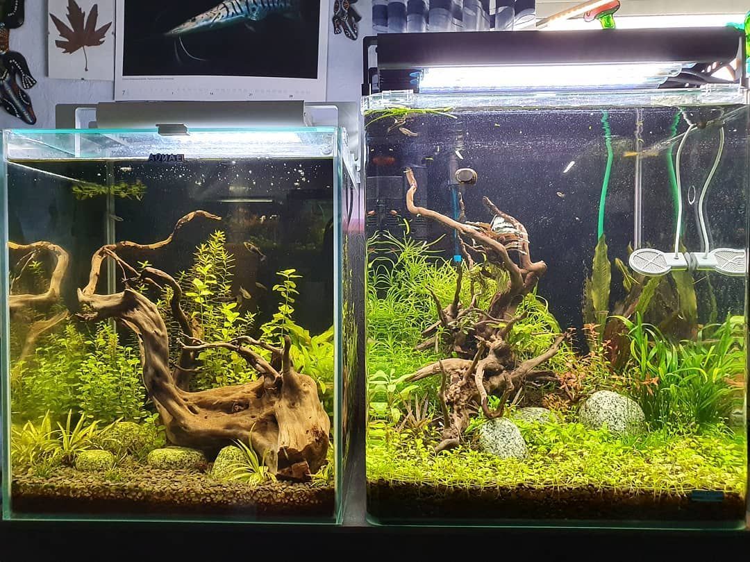 Werbung Aquarium Aquascape Aquascaping Aquascaper Aquaristik Aquascapes Plantedaquarium Plantedtanks Lifestyle Tropicaaquariumplants Freshwatertank