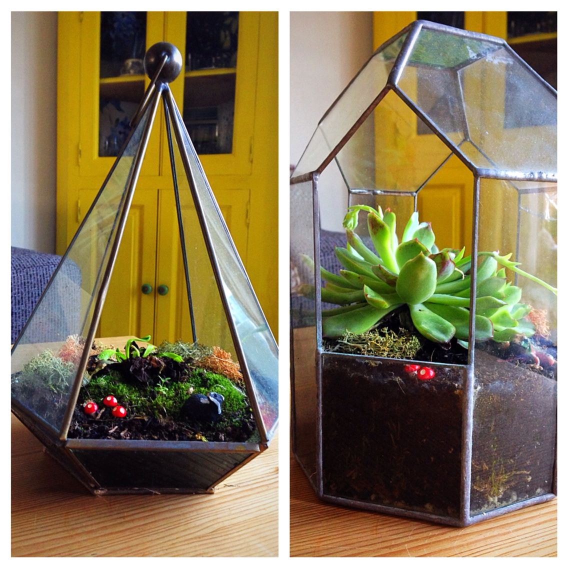 Terrariums I made last summer. One succulent in flower