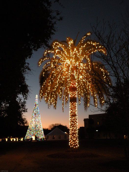 We Love A Well Lit Christmas Palm And This One Is Especially