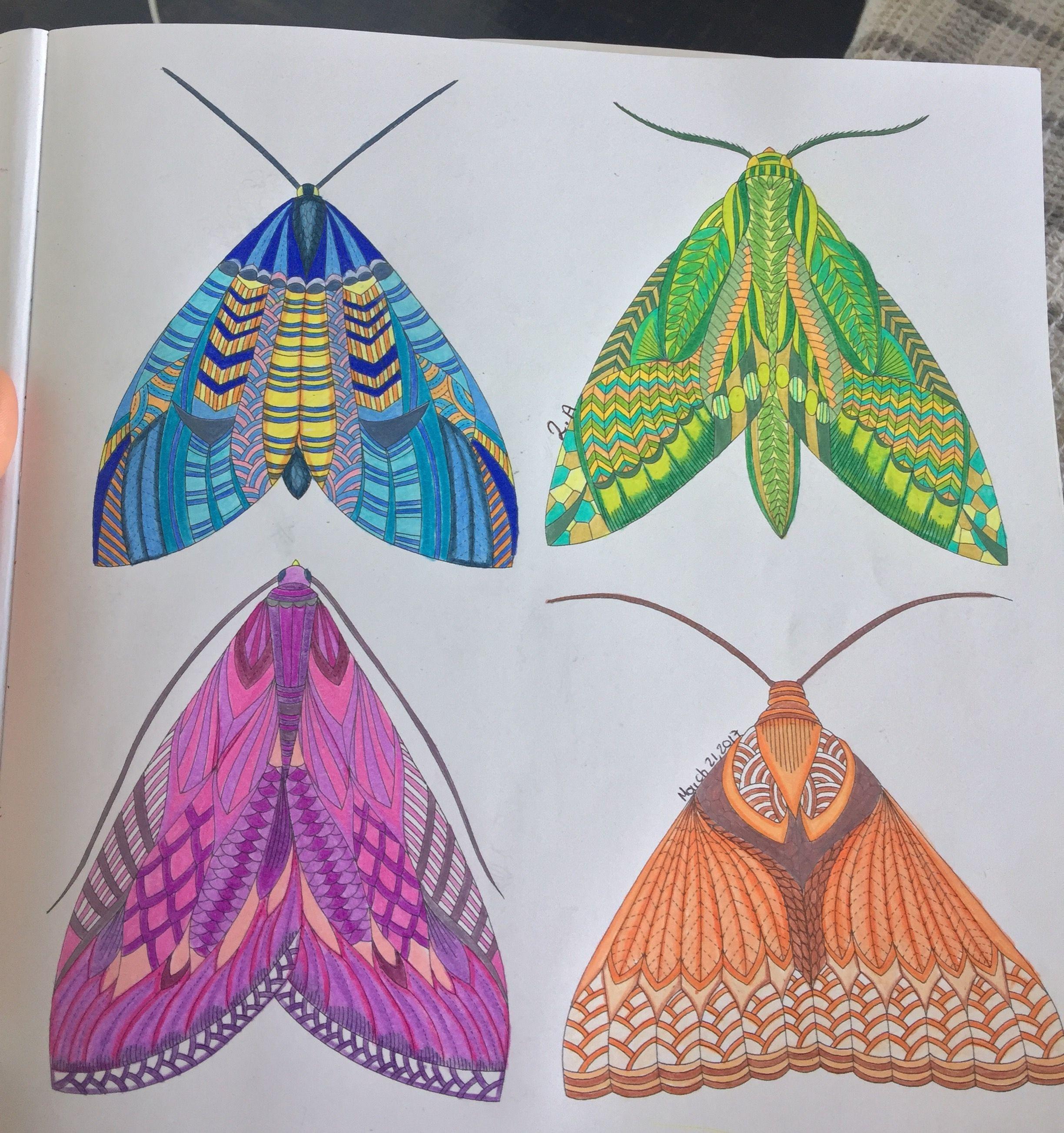 Animal Kingdom Millie Marotta Color Me Draw Moths Coloring Book Moth Millie Marotta Animal Kingdom Animal Kingdom Colouring Book Millie Marotta
