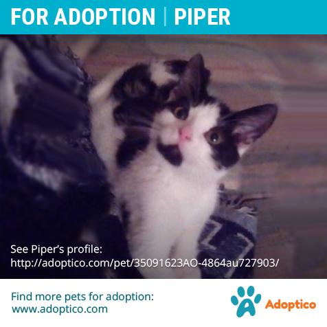 Pin On Adoptable Pets On Adoptico Com