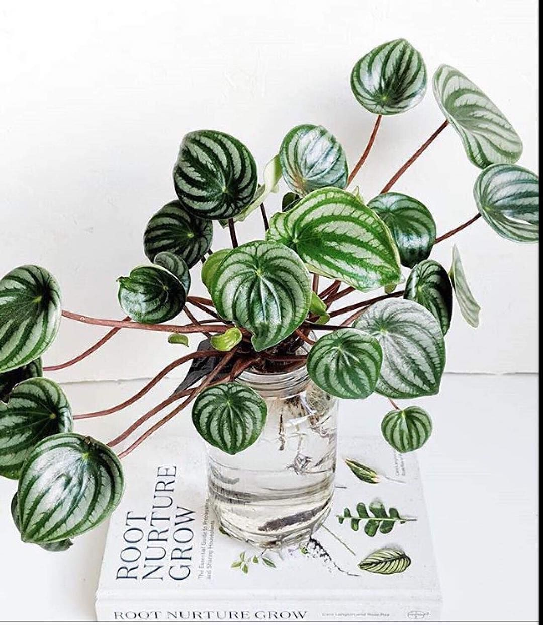 "Nursery Indoor Plants Near Me: House Plant Community🌱 On Instagram: ""Thanks A Lot"