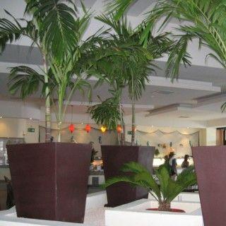 Tipo de macetas ideales para cada planta jardineria for Macetas para interiores hogar