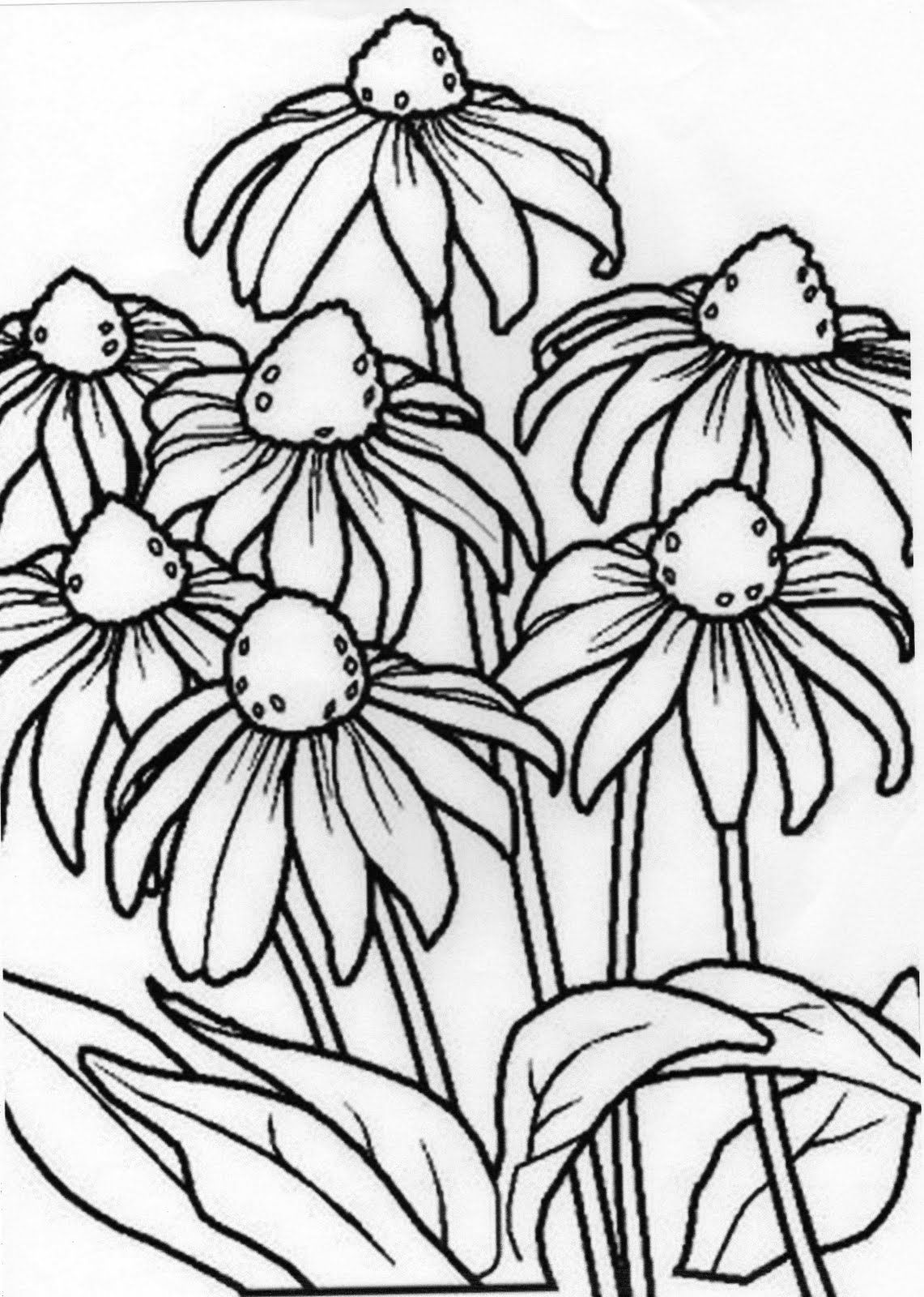 Peru Coloring Pages