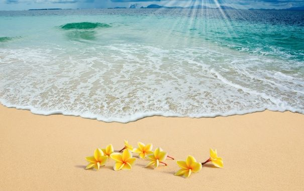 Oboi Summer Beach Sea Sand Plumeria Flowers Sunshine Plyazh