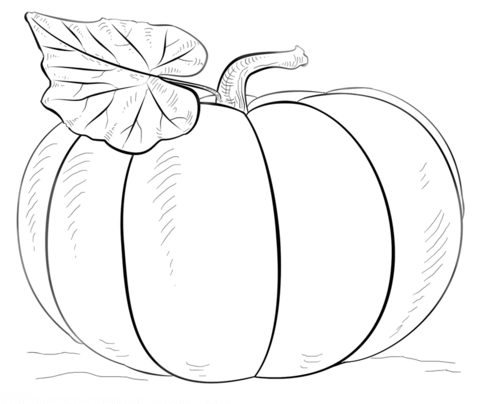 Pumpkin coloring page from Pumpkins