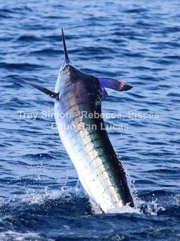 Latest fishing report from cabo san lucas mexico for Cabo san lucas fishing report