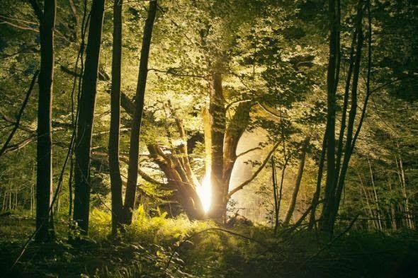 Luzes noturnas - As fotografias de paisagens naturais de Amelia Bauer