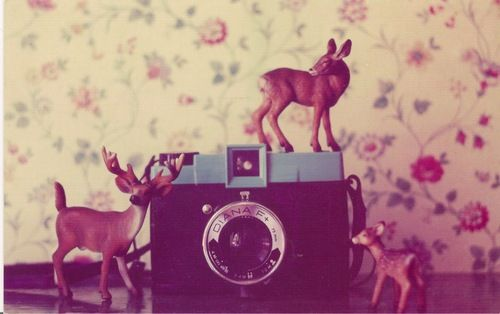The Postcard Chronicles • From Kaska, Poland (November 9, 2011) on We Heart It. http://weheartit.com/entry/17442577