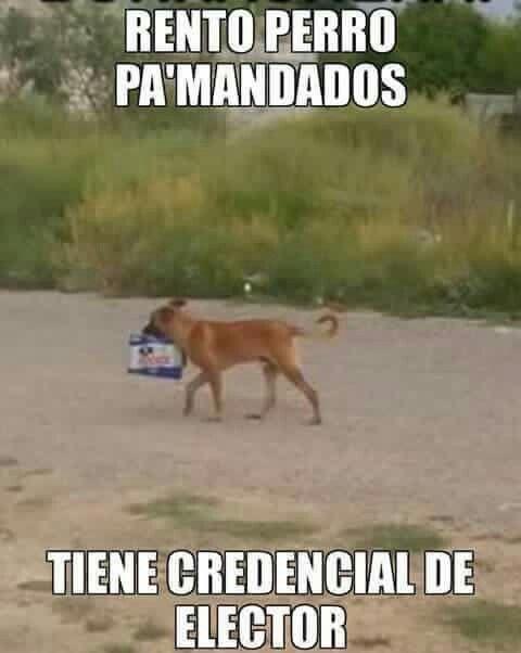 Rento Perro Pa Mandados Perros Borrachos Funny