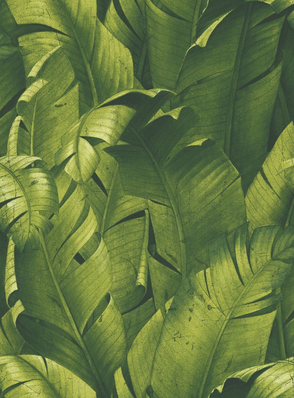 Tropical Banana Leaf Peel And Stick Wallpaper In Green By Nextwall Palm Trees Wallpaper Tree Wallpaper Tree Mural