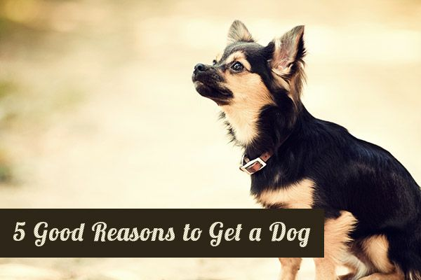 Good reasons to get a dog!?